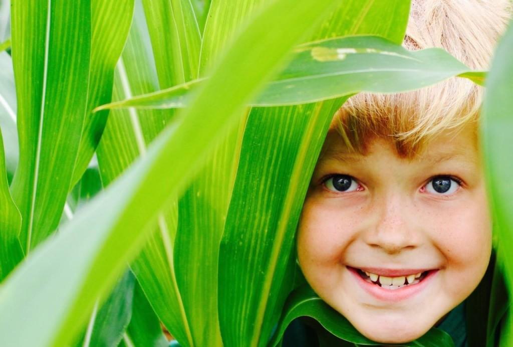 Corn Maze-Head