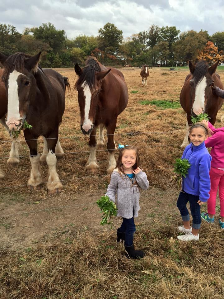 Corn Maze-Horses