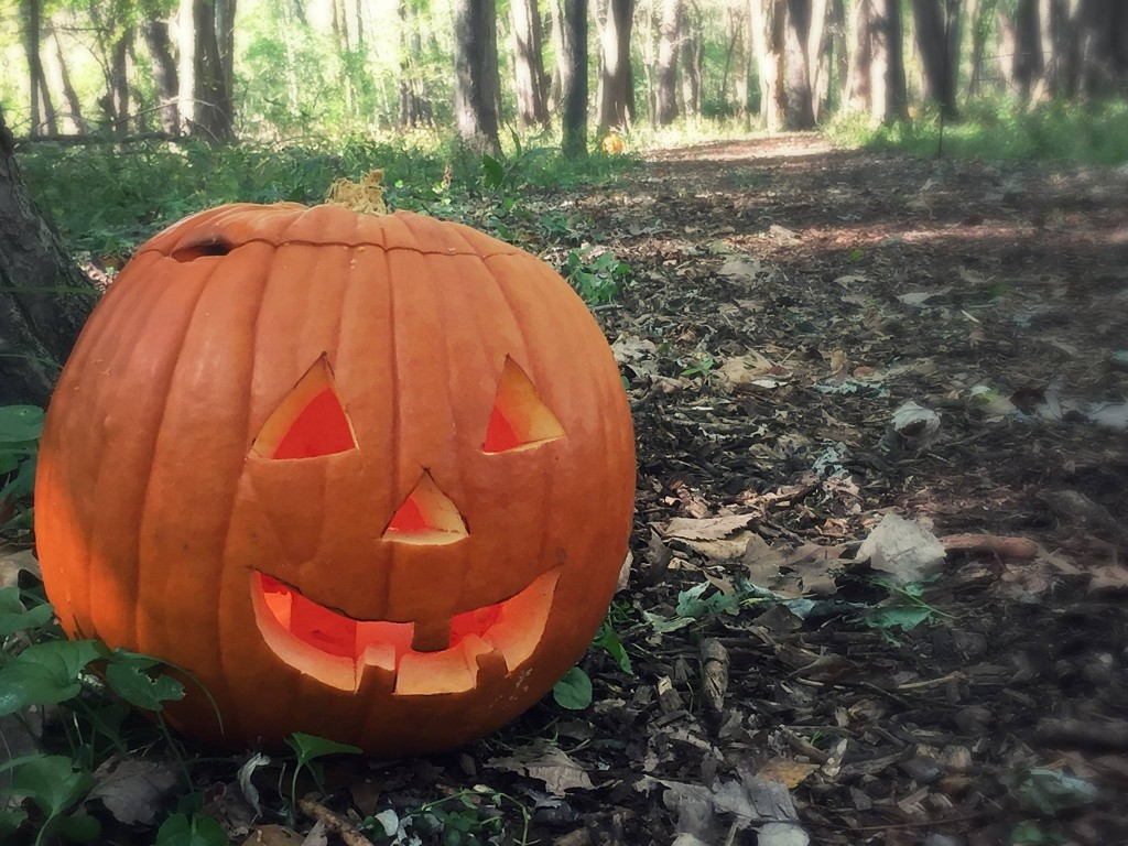 Pumpkin on Trail