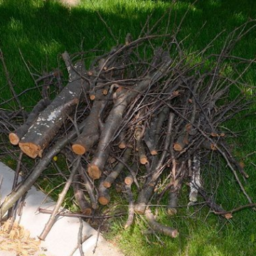 <strong>Brush Pickup</strong>